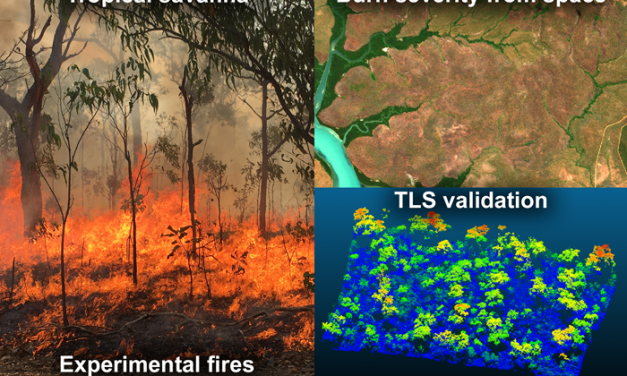 New Publication: Exploring the Potential of C-Band SAR in Contributing to Burn Severity Mapping in Tropical Savanna
