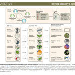 new publication on biodiversity metrics to measure from Space